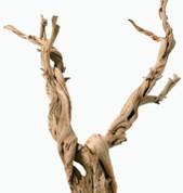 Ghostwood Branchy 90cm