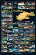 Loricariidae (L Number) Poster