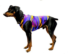 "For the medium sized and toy breeds, we offer unique Windhorse Dazzle Tees™. These are zippered stretchy ""Tees"" made with colorful premium stock nylon spandex prints and solids currently offered by Sleazy Sleepwear for Horses™. They are fun and are a ""must have"" apparel items for special pets.  Sizing: Length  XSmall 7""  Small 10""   Medium 12""   Large 14""  Xlarge 16""  XXlarge 20"""