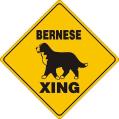 "Bernese Mountain Dog Xing Aluminum 12""x12"" / Yellow & Black"
