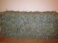 Bingaling Bunnybox Hay® - Simple Orchard  - Full-sized Bale