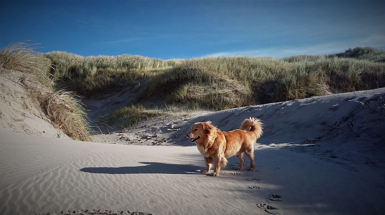 Top 10 Dog Friendly Beaches