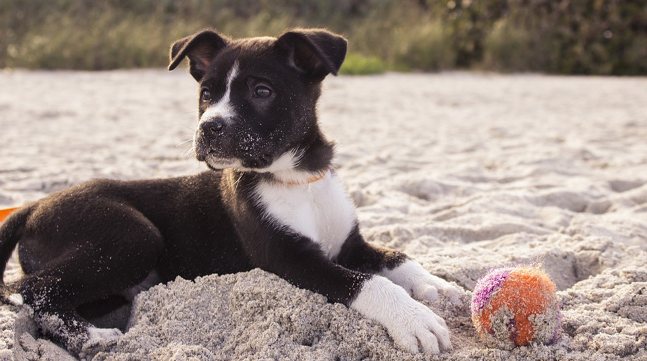 Sun Tips for Keeping Your Pet Safe