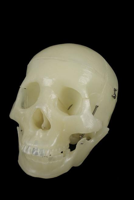 1st Quality Glow In the Dark Bucky Skull