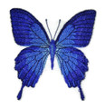 Butterfly Blue Triangle