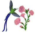 Longtail Sylph Hummingbirds
