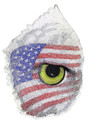 Eye Of The American Eagle