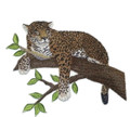 Jaguar On Tree