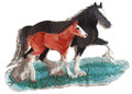 Clydesdale Pair