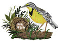 Eastern Meadowlark and Nest