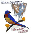 Barn Swallow And Sketch