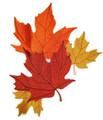 Maple Leaf Montage