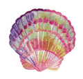 Scallop Shell in Watercolor