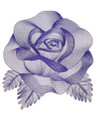 Elegant Etching Rose