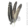 Barred Turkey Smudging Feather