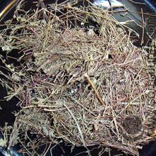 Madder Root, Aromatic