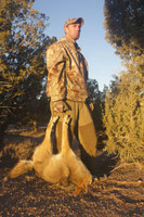 Predator Packer & Tail Stripper.  Packing a Coyote