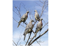 Lucky Duck Clip On Dove Decoy 4-Pack