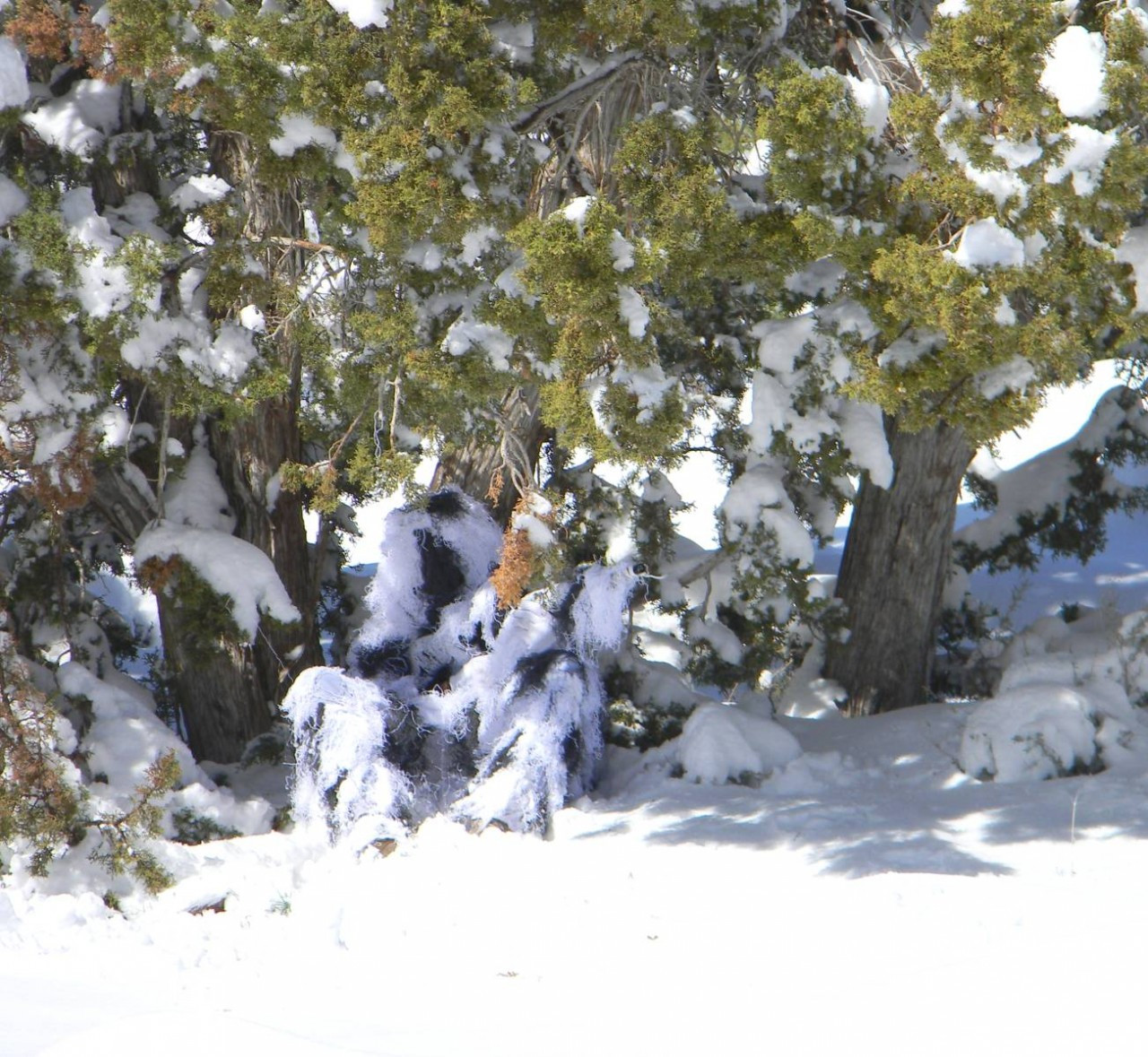 Snow camouflage ghillie (6 yards from camera)