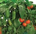 AeroGarden Salsa Garden Seed Kit