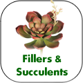 fillers-succulents.png