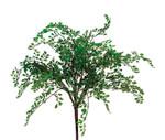 Maiden Hair Bush (New Generation PVC)