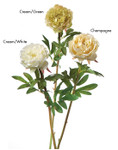 Peony Angelica, Single with Leaves