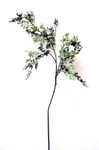 Pongee Boxwood Spray with 4 Branches with Seeds