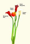 Real Touch MEDIUM Calla Lily