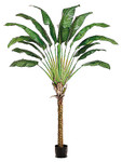 8-Foot Travelers Palm Tree, with 14 Large Leaves - Potted in PVC Container