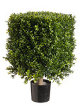 2-Foot Square Boxwood Topiary, in Container