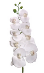 Real Touch Artificial Phalaenopsis Orchids