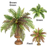 Boston Fern Bush w/24 Branches