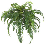 New Northern Holly Fern Bush x 40 Branches
