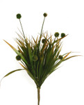 Wild Grass with 9 Pods
