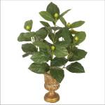 Magonlia Leaf Bush