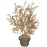 Forget-Me-Not Mini Boxwood Bush