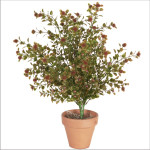 Yaupon Button Leaf Bush x 9