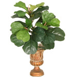 Fiddle Leaf Bush x 3 with 35 Leaves