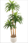 6-Foot Dracaena Massangeana Tree