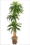 7-Foot Dracaena Massangeana Tree