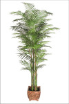 7-Foot Deluxe Reed Palm x 7 Branches w/1577 Leaves
