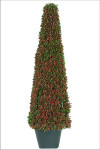 Mini Tea Leaf Cone Shape Topiary in Pot