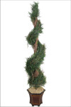 5-Foot Spiral Italian Cypress Topiary