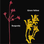 Kangaroo Paws Spray