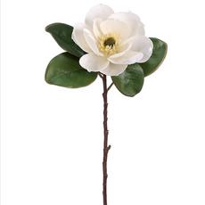 Magnolia Spray - Cream