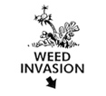 Weed Invasion