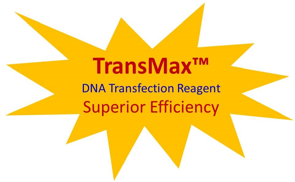 transmax-promotion-stars-2016-c.jpg