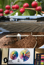 SCA Coffee Skills Program - Introduction to Coffee