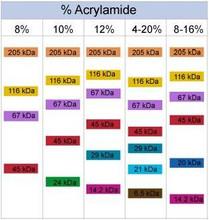 SDS-PAGE Run % Acylamide Comparison